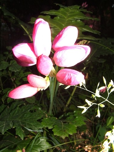fiore, botanica, giardinaggio, piante, estate, quesito, politica, piacevole, leggerezza, quesito